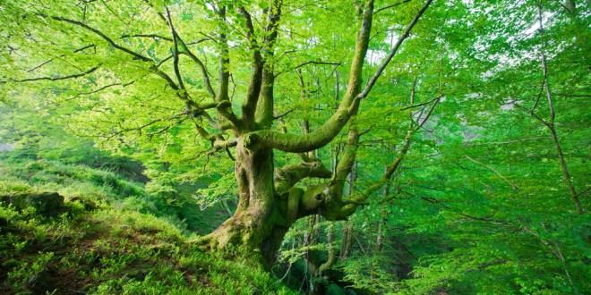 Patrimoni Natural