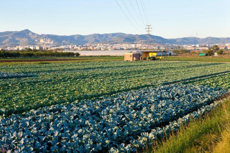 Barcelona, capital de l'agroalimentació catalana