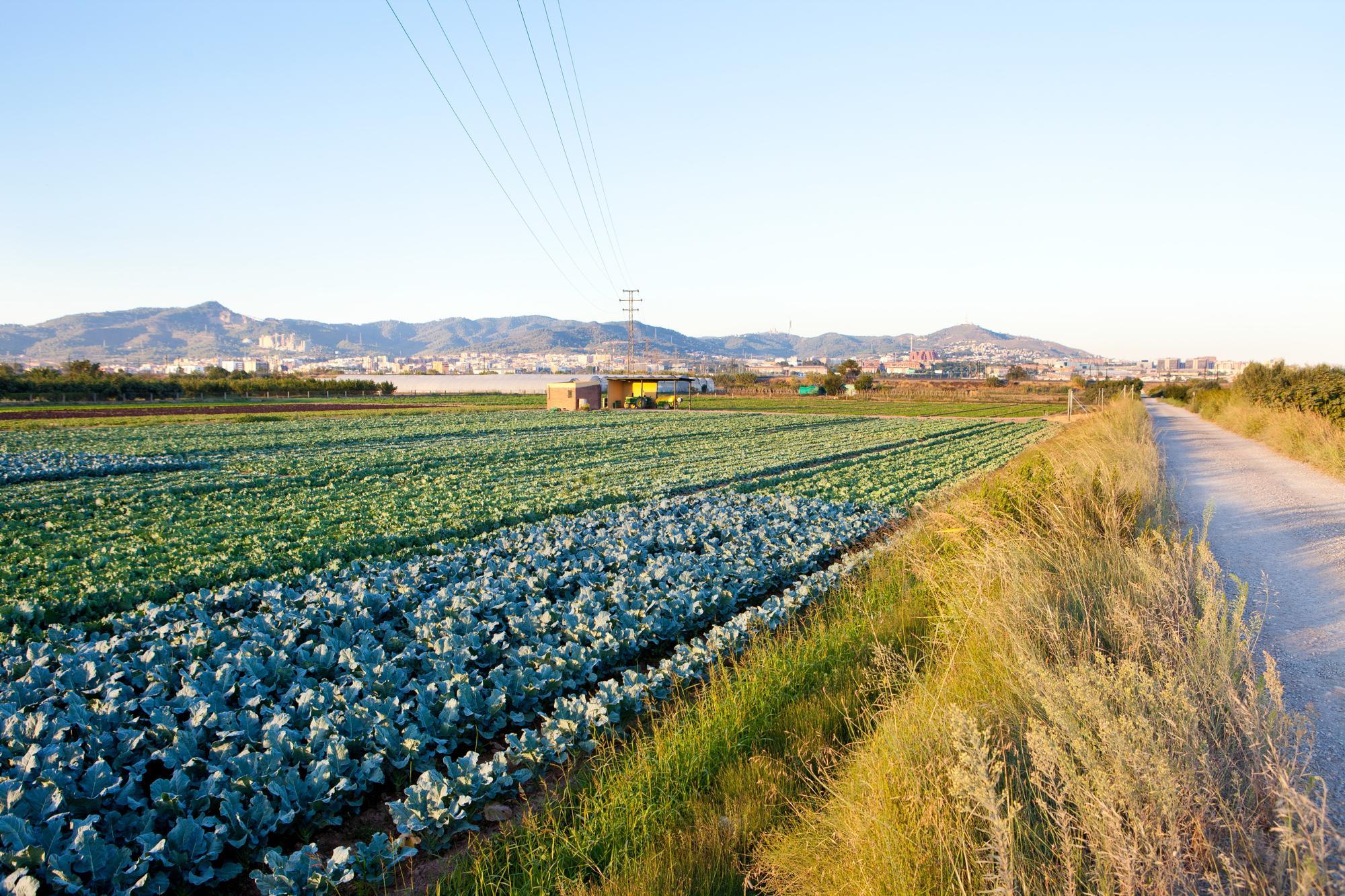 Parc Agrari del Baix Llobregat. Autor: Jordi Salinas. Drets d'explotació: AMB